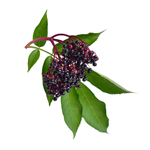 Support Your Health with Elderberries